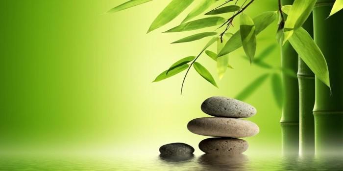 Si Persevera… Ud. Crecerá Inevitablemente, Como El Bambú Japonés