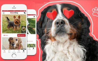 MatchDog y GenFriends, la pareja ideal del buen marketing