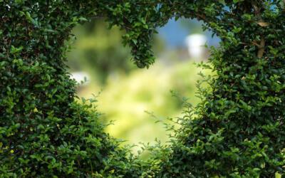 Por qué debes hacerle caso a la sabiduría de tu corazón